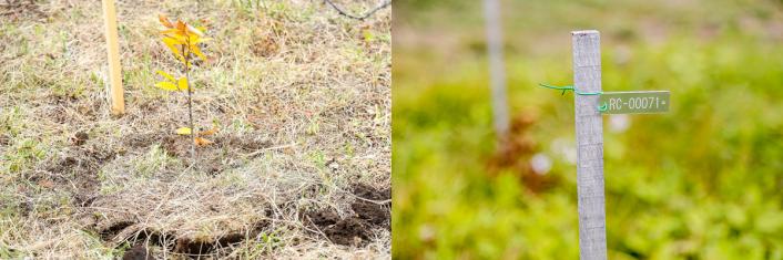 IMG_5739-706x235 紅葉で彩られた東北をJeep®が駆け抜ける!岩手県宮古市で開催された植樹イベント<Present Tree in 宮古>をサポート!