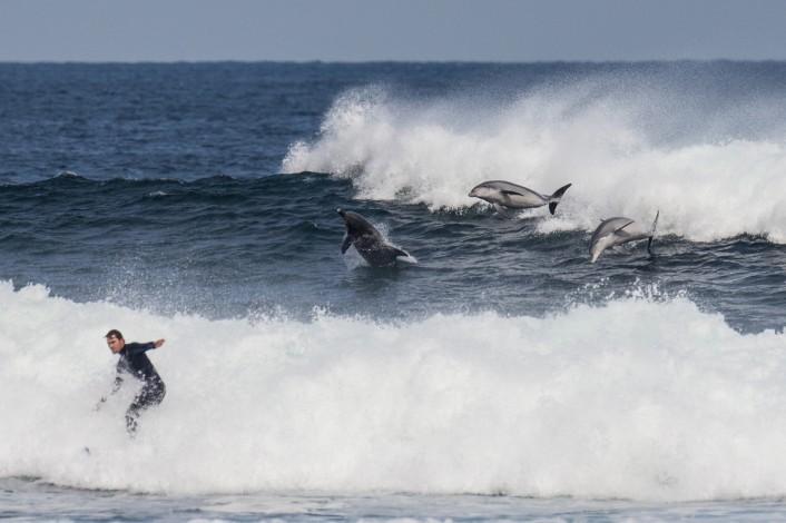 3_dolphins-joli-WAB0477-706x470 Jeep®を巡るアツい戦い。2016年WSLチャンピオンシップ・ツアー ハイライトPart 2