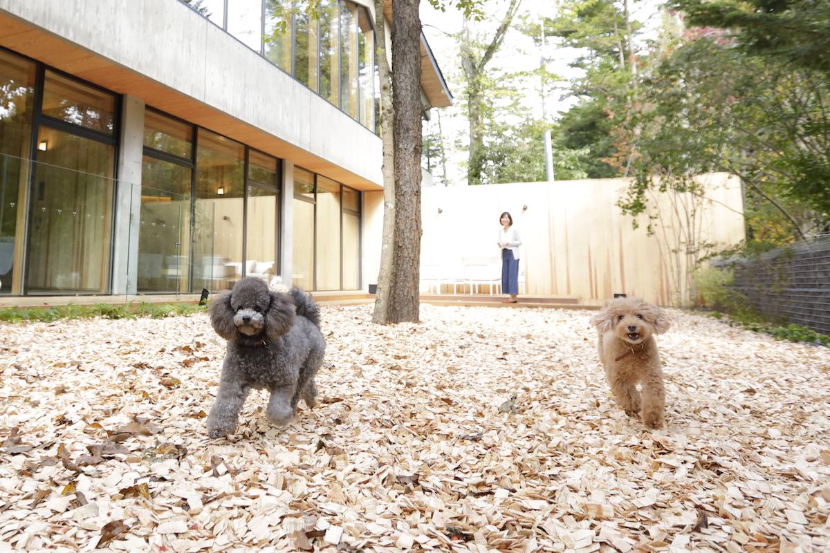 190300_jeep_pet_hotel_010 【ペットと一緒に泊まれるホテル11選】愛犬と快適に過ごせる日本各地の宿&リゾートホテルをご紹介!