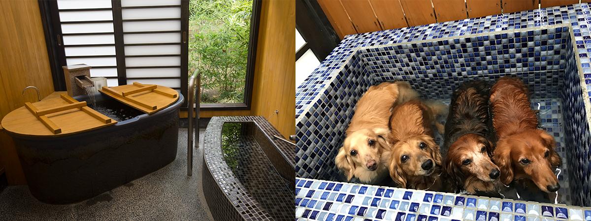 190300_jeep_pet_hotel_025 【ペットと一緒に泊まれるホテル11選】愛犬と快適に過ごせる日本各地の宿&リゾートホテルをご紹介!