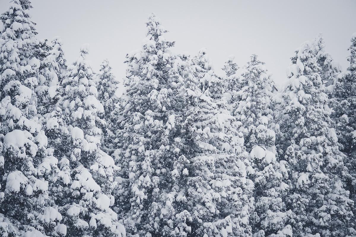 05_PC150630 太陽の光とともにある、サスティナブルな雪国の暮らし
