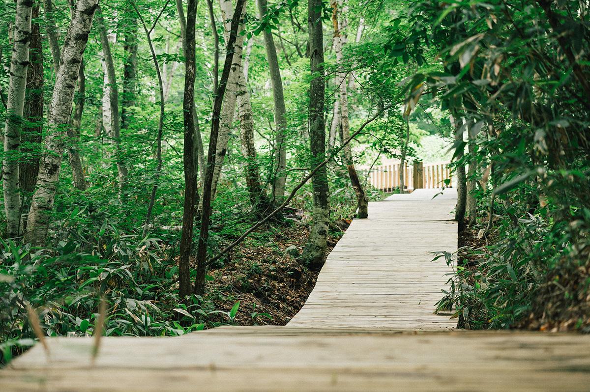 1-1 夏の苗場でボードウォーク・ボランティアキャンプを開催!Jeepが『Realの森』を通してサポートする『フジロックの森プロジェクト』