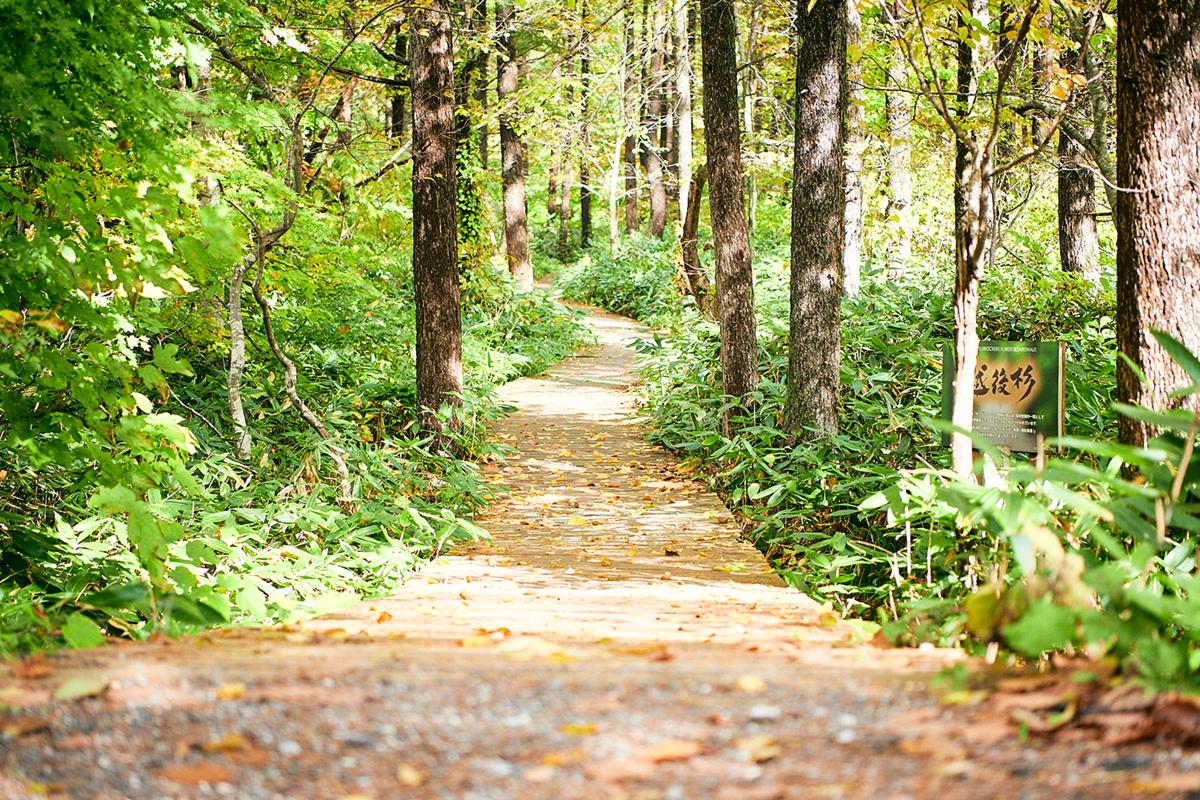201024_QTC0232 Jeepがサポートする『フジロックの森プロジェクト』。次の10年に向けて生まれ変わる苗場の風物詩